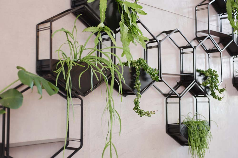 Buy A Oblica Wabe Wall Planter In Melbourne